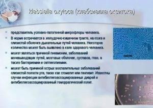 Выявление клебсиеллы в кале у грудничка симптомы и лечение заболевания