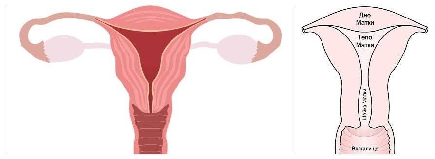 Как влияет загиб матки на роды