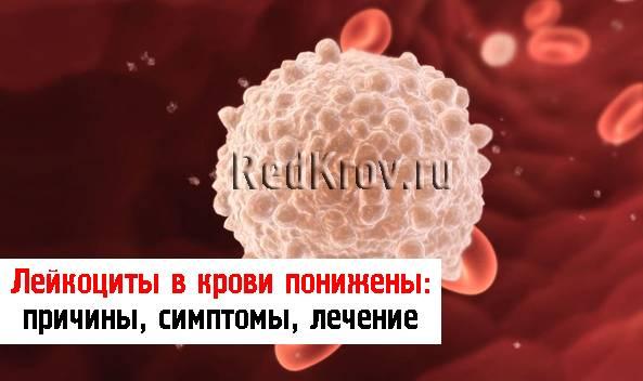Повышенные лейкоциты в крови у ребенка: причины патологии, что делать родителям