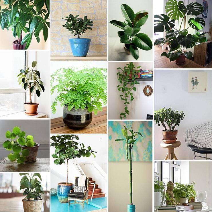 Как выбрать подходящие комнатные растения для детей?