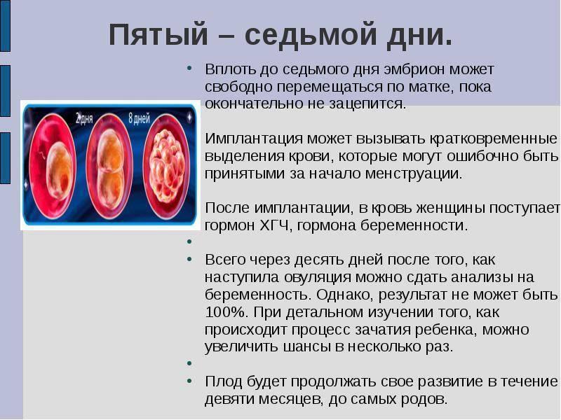 Когда происходит имплантация эмбриона после овуляции - узнай подробно!