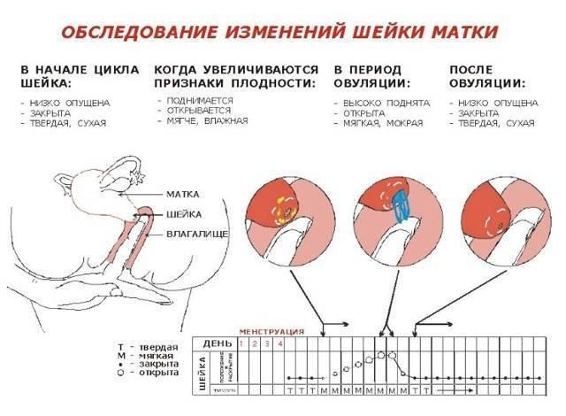 Болит голова при овуляции: причины, лечение - ovulyacia.ru