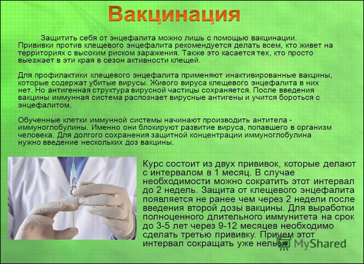 Схема прививок от клещевого энцефалита детям: противопоказания, возраст, периодичность введения вакцин