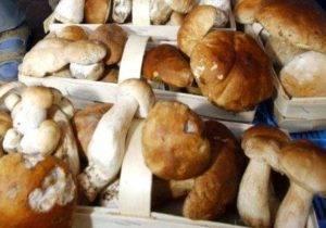 Можно ли грибы при грудном вскармливании? когда можно грибы при гв  кормящей маме? грибы – польза и вред для организма