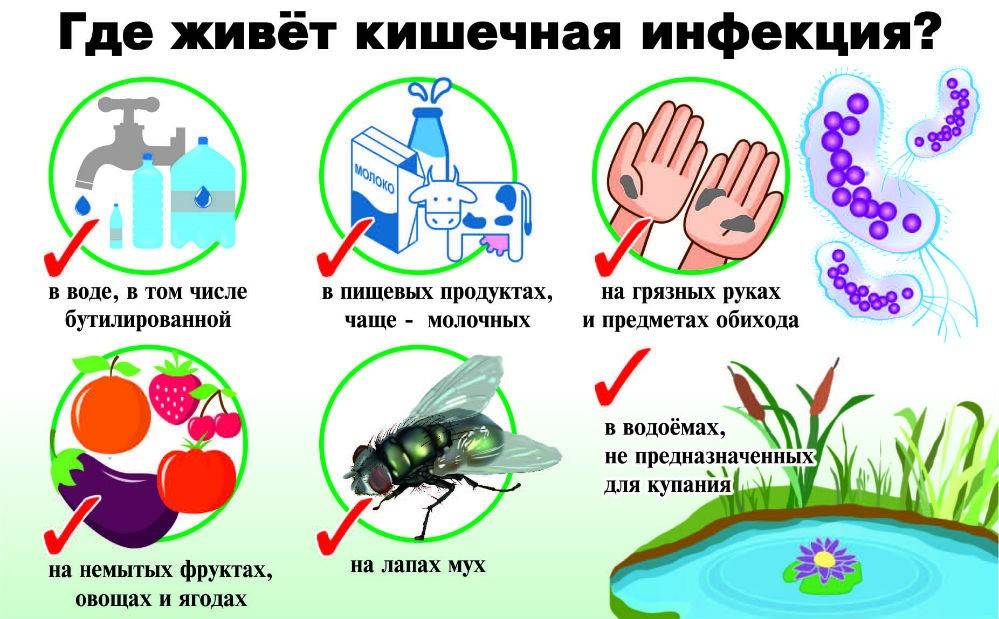 Самое известное лечение кишечной инфекции у взрослых