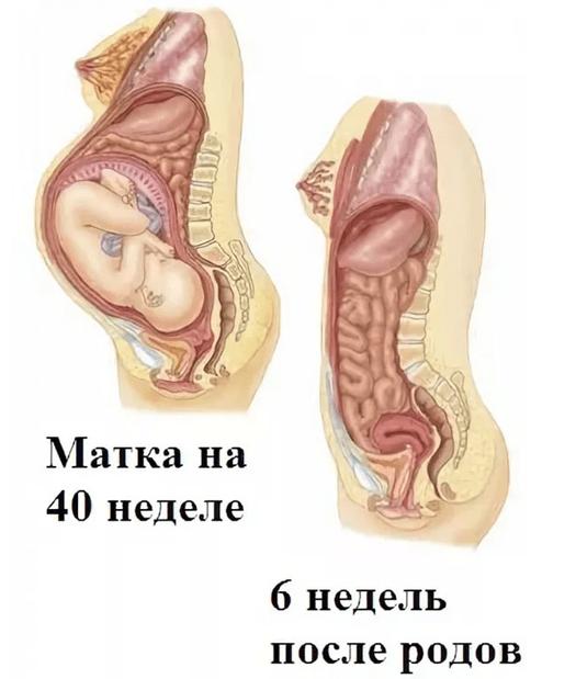 Почему из влагалища выходит воздух во время секса, после родов или при беременности. отчего выходит воздух из матки