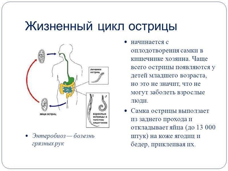 Симптомы энтеробиоза у детей, схема лечения и профилактика заболевания