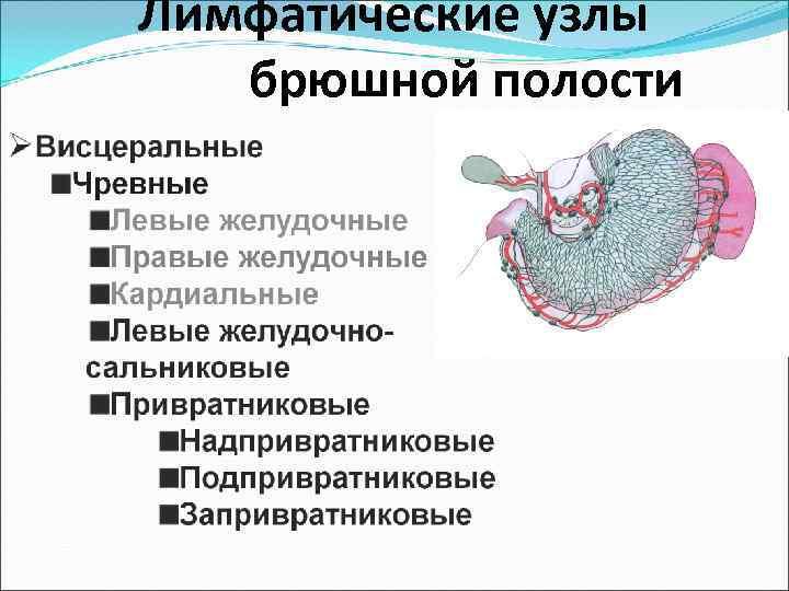 У ребенка увеличены лимфоузлы в брюшной полости, в кишечнике | prof-medstail.ru