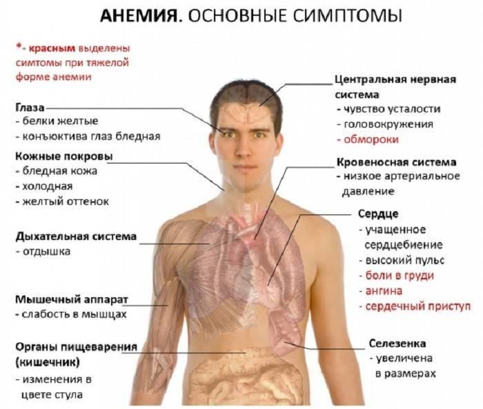 Анализ крови при орви у детей: расшифровка, норма и патология