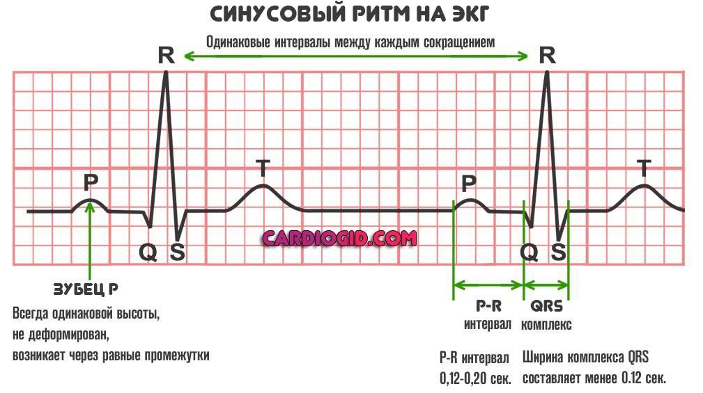 Кардиограмма сердца расшифровка норма таблица у детей
