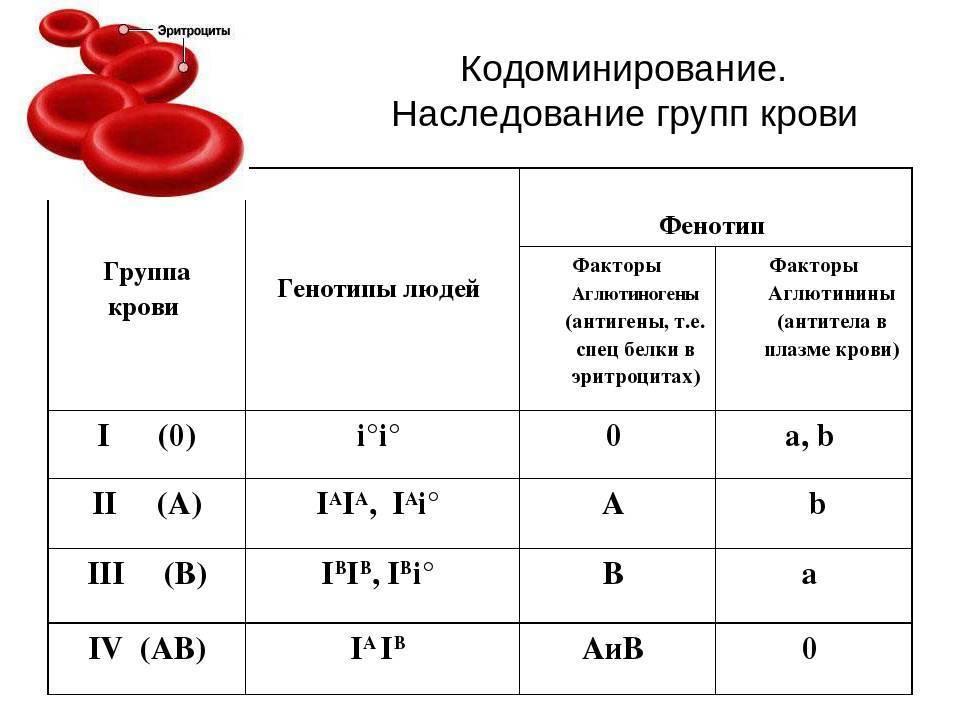 Наследование групп крови. наследования резус-фактора. резус-конфликт.