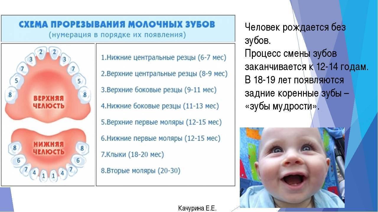 Когда лезут зубы у ребенка — таблица норм для родителей