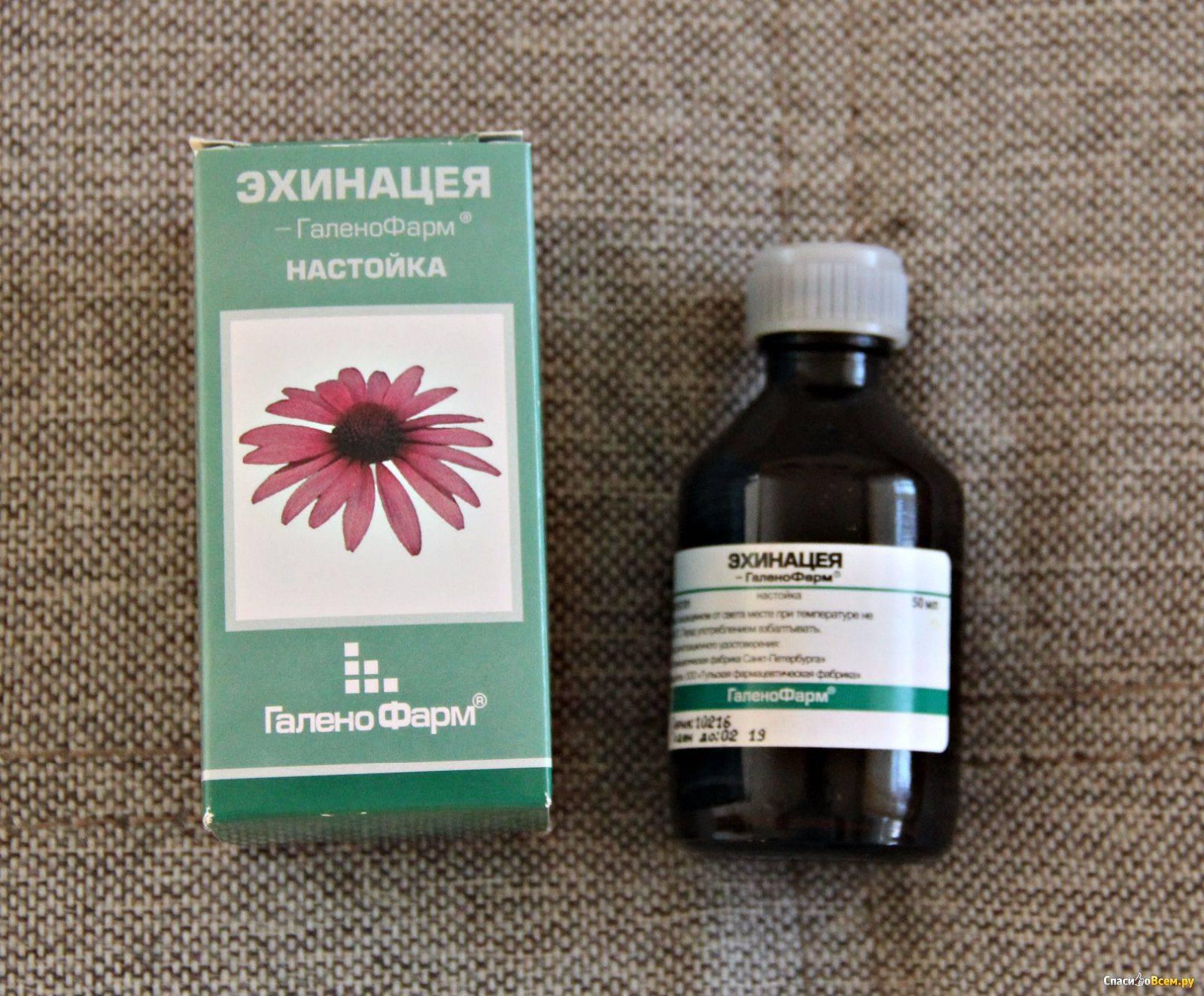 Настойка эхинацеи для детей: инструкция по применению для укрепления иммунитета, можно ли давать ребенку 3 лет, отзывы