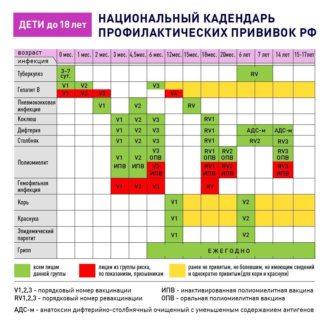 Таблица прививок, которые проводятся взрослым по возрасту