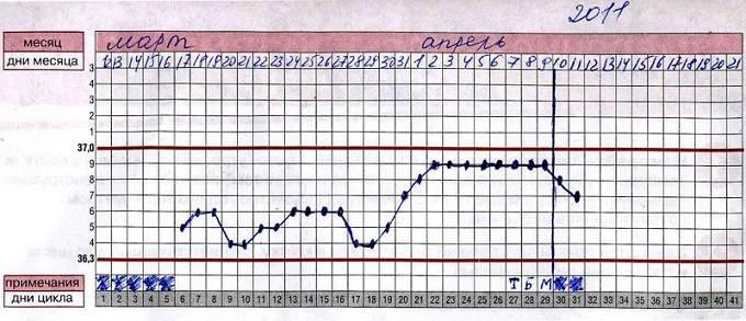 Базальная температура, как правильно измерять