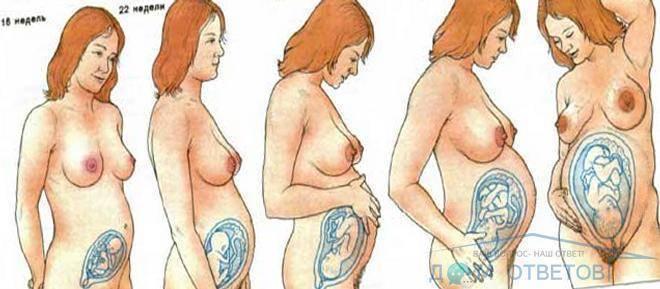 Болит промежность на 26 неделе. болит промежность, мышцы живота и между ног во время беременности: почему возникает боль на ранних и поздних сроках - женский портал