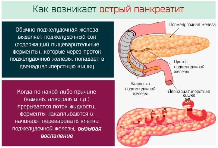 Диета при увеличении поджелудочной железы у ребенка: полезные и вредные продукты, график питания