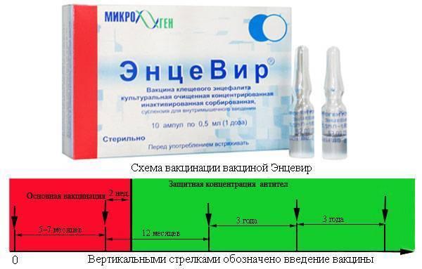 Прививка от клещевого энцефалита для взрослых