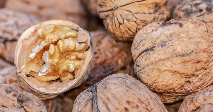 Орех макадамия при беременности: можно ли употреблять, польза и вред