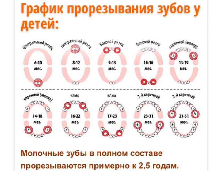 Когда режутся первые зубы у младенцев, во сколько месяцев: схема и последовательность