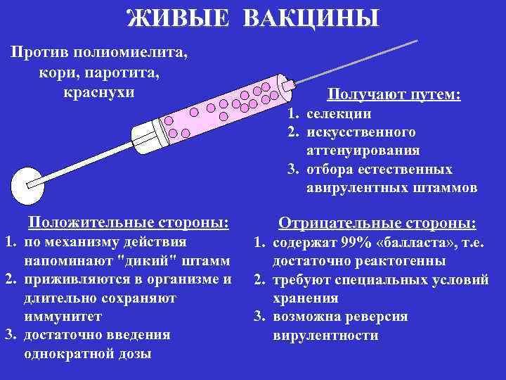 """Прививка """"корь-краснуха-паротит"""" – кпк: противопоказания, реакция и побочные действия"""