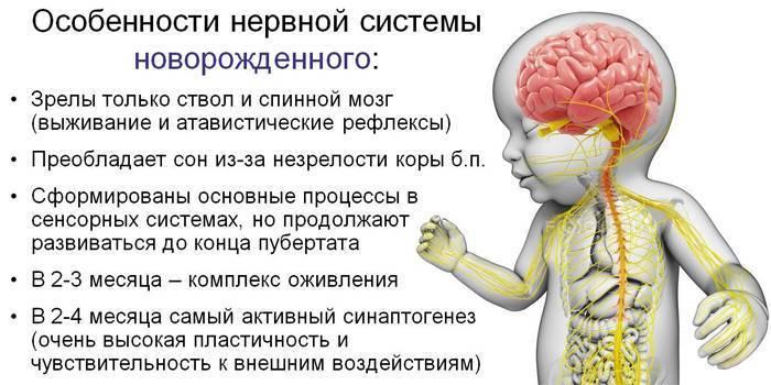 Что такое эхопризнаки незрелости головного мозга у новорожденных