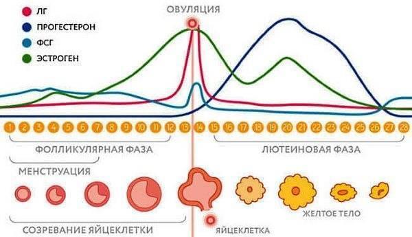 Низкий прогестерон у женщин в организме