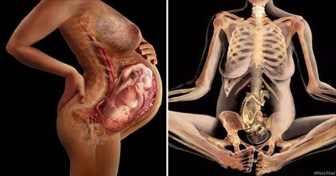 Почему возникает боль в паху при беременности | беременяшка что означает боль в паху при беременности? | беременяшка