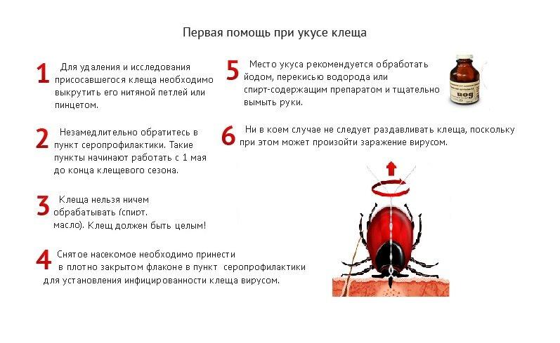 Что делать, если ребенка укусил клещ. правила помощи после укуса клеща. как избежать возникновения клещевого энцефалита