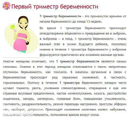 На каком сроке делают узи второго триместра при беременности: цели, нормы и опасные отклонения
