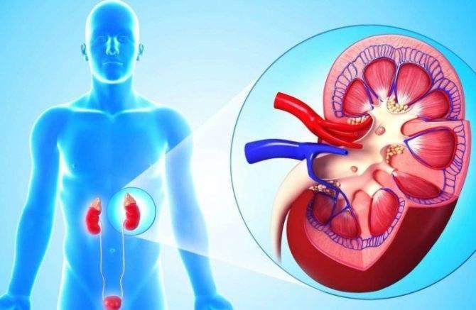 Пиелонефрит удетей: симптомы, лечение ипрофилактика