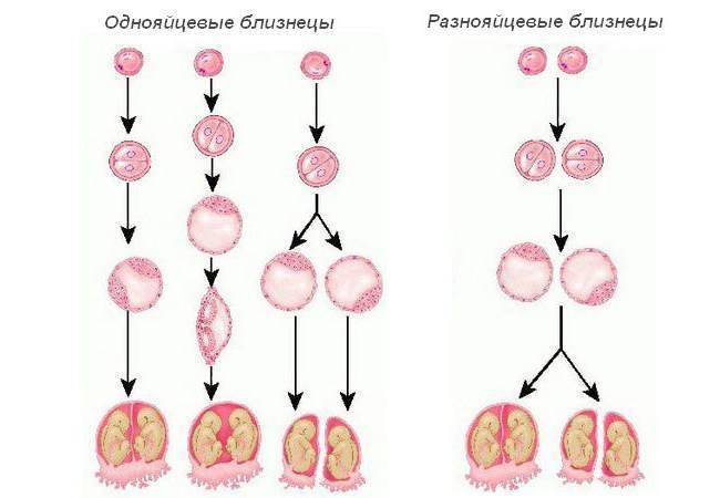 Беременность после эко: особенности и риски - репродуктивные технологии - babyplan
