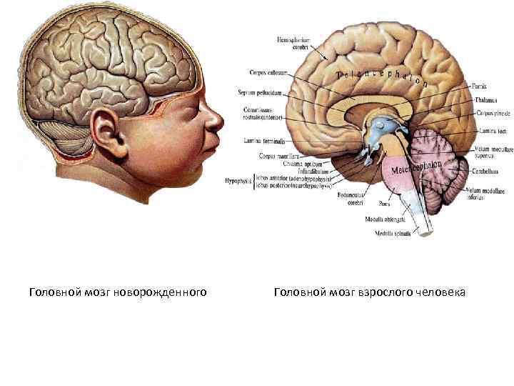 Последствия и лечение нейрофизиологической незрелости коры головного мозга у новорожденного ребенка - все о суставах