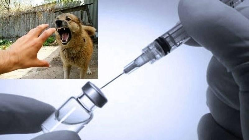 Ребенка укусила собака надо ли ему делать прививку против столбняка