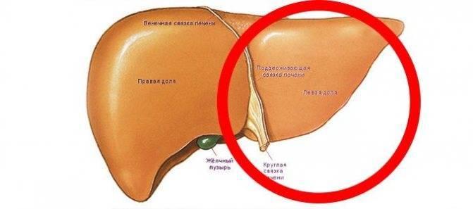 Причины возникновения и методы лечения гепатомегалии