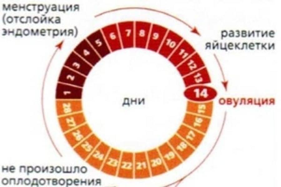 Можно ли забеременеть после овуляции на следующий день, через 2, 3, 4, 5, 6 дня