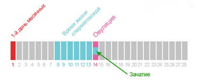 За сколько дней до овуляции можно забеременеть: вероятность зачатия за 2, 4, 5, 6 суток