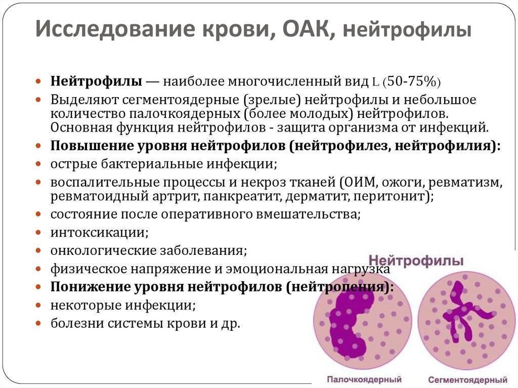 Почему в крови палочкоядерные и сегментоядерные нейтрофилы могут быть повышены