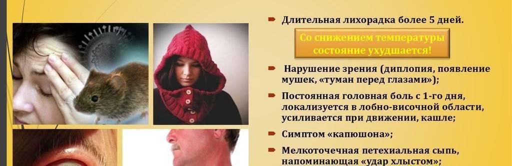 Мышиная лихорадка: симптомы, лечение и профилактика