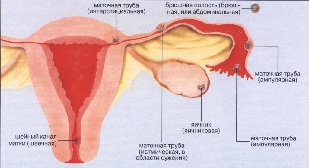 Какие ощущения могут быть в животе у женщины на ранних сроках беременности, и как их распознать?