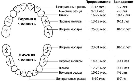 Молочные зубы у детей - когда начинают выпадать и меняться: схема и сроки | spacream.ru