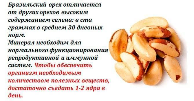 Грецкие орехи при беременности: можно ли есть на ранних и поздних сроках, польза и вред