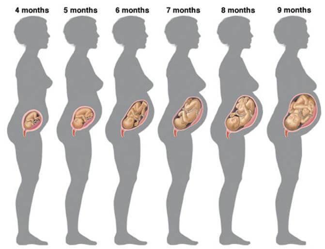 7 месяц беременности: это сколько недель, фото живота, роды можно ли летать
