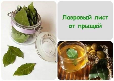 Рецепт отвара из лаврового листа для выкидыша