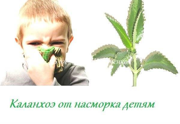 Помогает ли сок алоэ при лечении насморка у детей