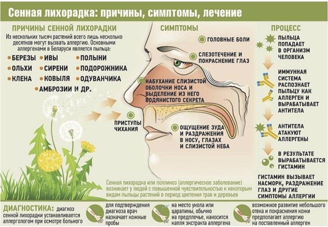 Аллергия на пыльцу у ребенка: лечение и асит