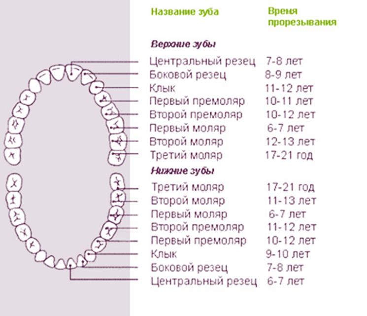 В каком возрасте меняются зубы у детей: порядок и сроки протекания процесса, рекомендации по уходу за полостью рта |