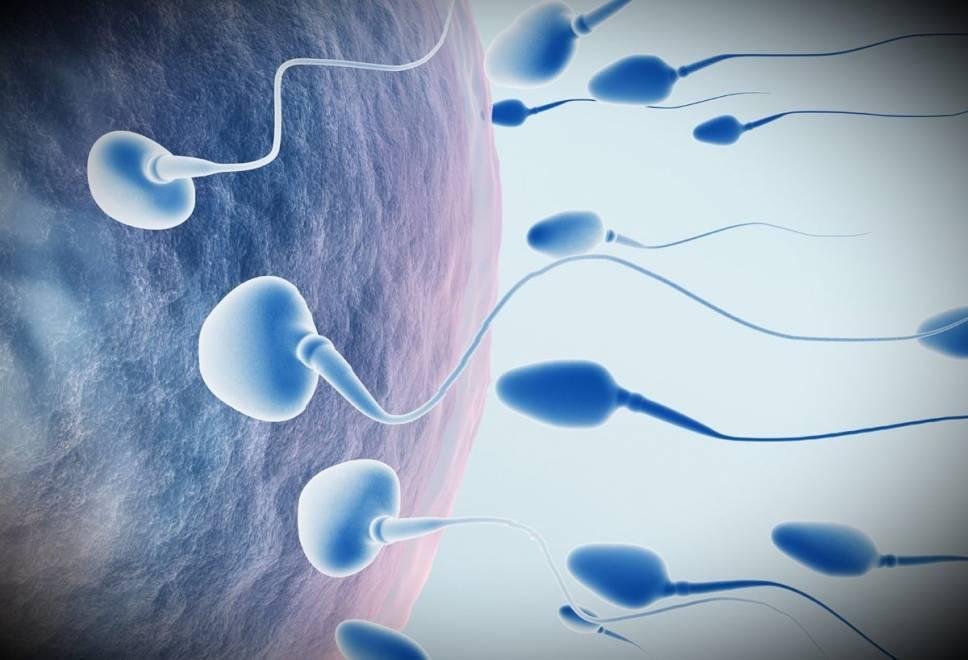 Гематоспермия: кровь в сперме   университетская клиника в спб