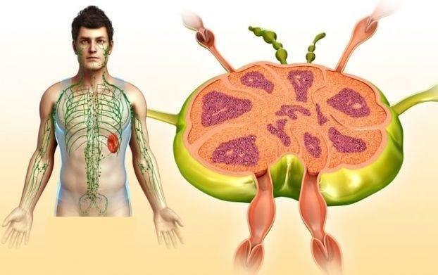 Увеличены лимфоузлы брюшной полости у ребенка