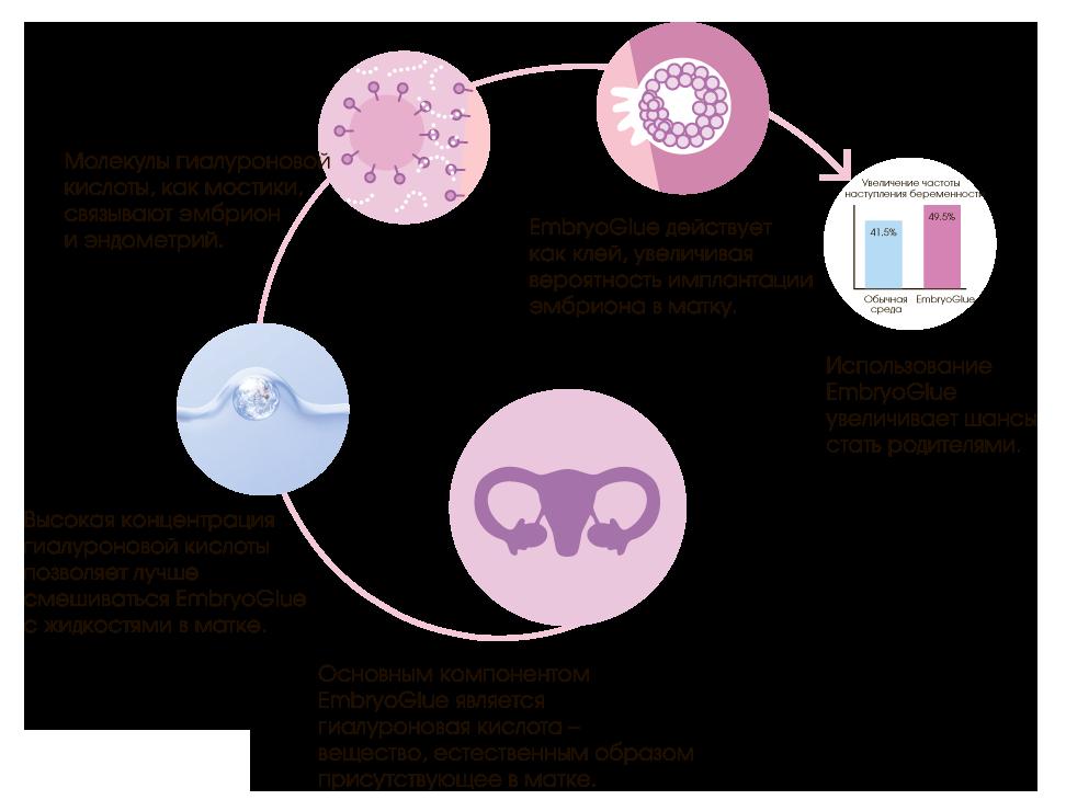 На какой день после овуляции происходит имплантация эмбриона?